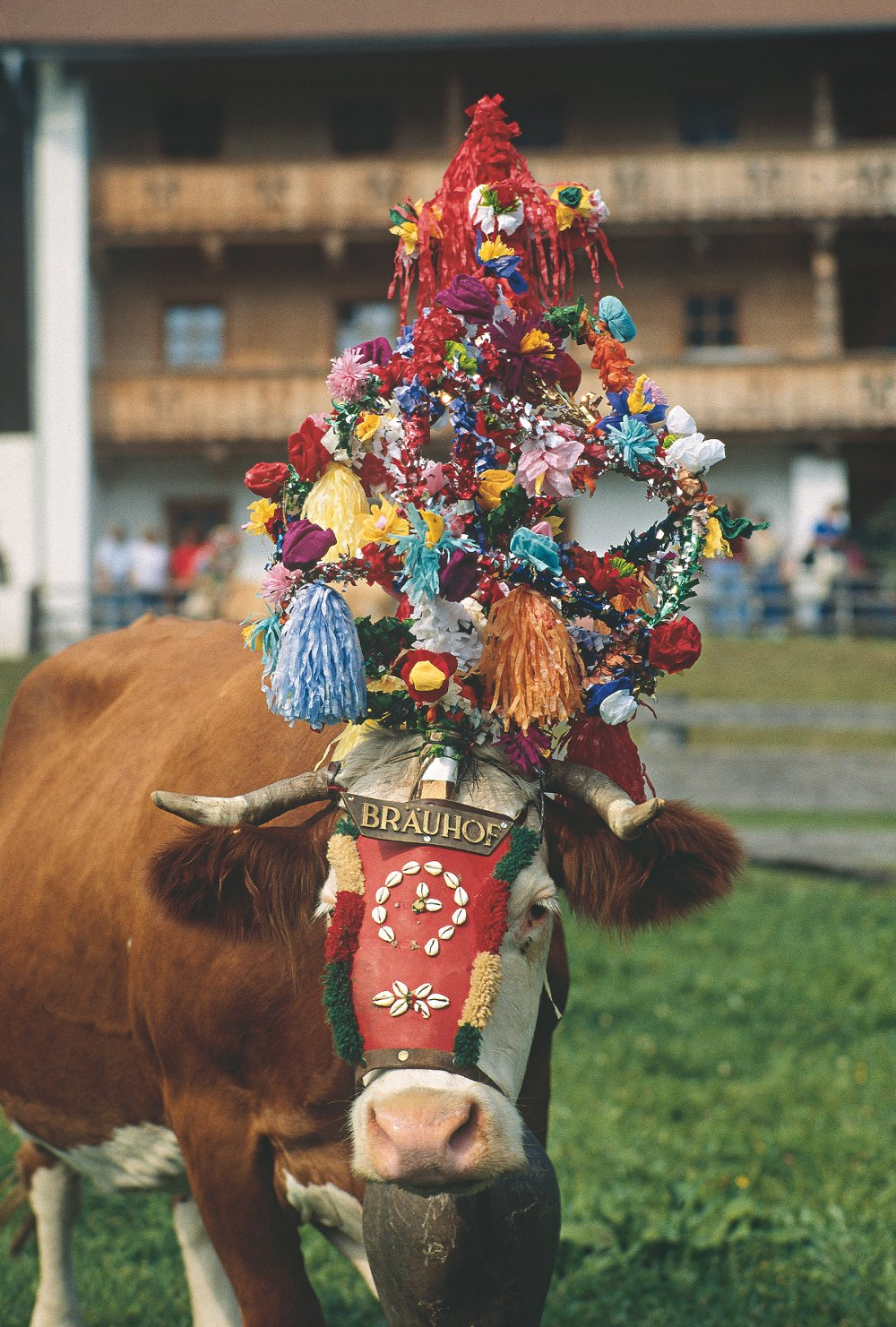 Beste Spielothek in Groß Kuh finden