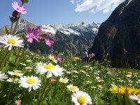 Uitzicht op de bergen in Oostenrijk