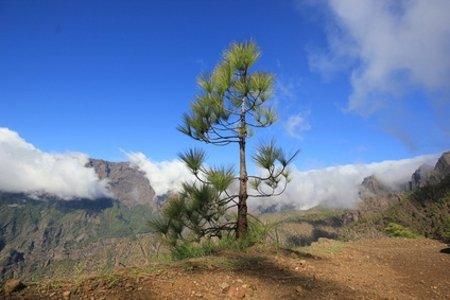 Ferienhäuser und -wohnungen auf La Palma