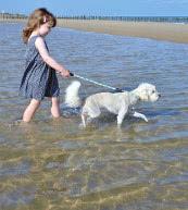 Vacaciones con perro en una casa de vacaciones o un apartamento en Bélgica.
