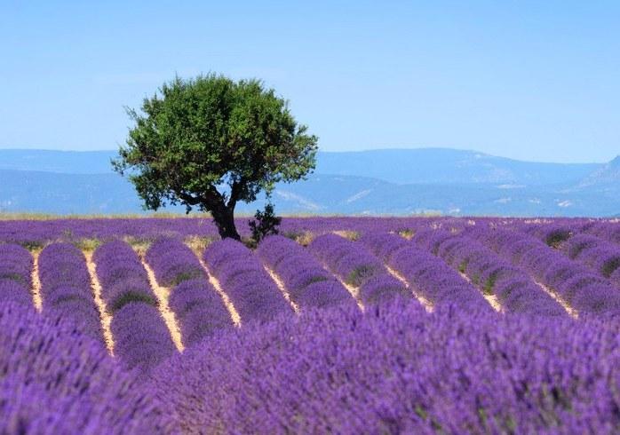 Beste Spielothek in Provence finden