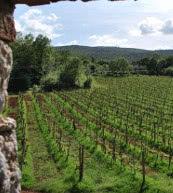 Vue d'un appartement situé dans un domaine entouré de vignes.