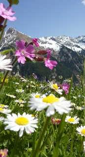 Ferienhausurlaub in Österreich
