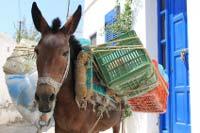 Vollbepackter griechischer Maulesel