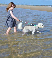 Vacation for dog lovers in a holiday home or holiday apartment in Belgium.