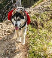 Urlaub mit Hund in einer Ferienwohnung oder einem Ferienhaus in der Schweiz.