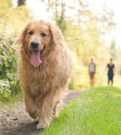Vacaciones con perro para amantes de los animales en Chequia.