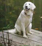Urlaub mit Hund in einer Ferienwohnung oder einem Ferienhaus in Deutschland.