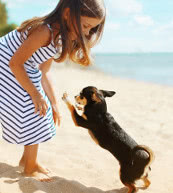 Vacation for masters and their dogs in a pet-friendly holiday home or a holiday apartment in Spain.