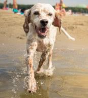 Vacaciones con perro en un apartamento o en una casa de vacaciones en Hungría.