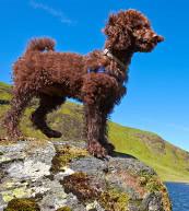 Urlaub mit Hund in einer Ferienwohnung oder einem Ferienhaus in Irland.