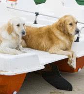 Ferien mit Hund in einem Landgut, Ferienhaus oder einer Ferienwohnung in Italien.