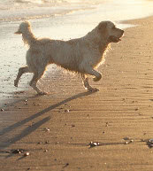 Reisen für Hundeliebhaber. Ferienwohnungen in Portugal.