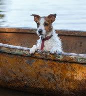 Vacaciones para los que tienen perro en un apartamento o en una casa de vacaciones en Suecia.