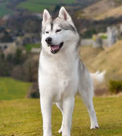 Vacation for dog lovers in a holiday home or a holiday apartment in Great Britain.