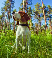 Hundefreundlicher Urlaub in einem Ferienhaus oder in einer Ferienwohnung in Finnland.