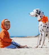 Vacaciones para perro y dueño en un apartamento o en una casa de vacaciones en los Países Bajos.
