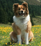 Animal-friendly vacation in holiday accommodation for dogs and their masters in Austria.