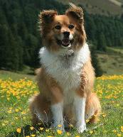 Amantes de los animales: vacaciones en un alojamiento para perro y amo en Austria.