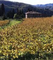 Von Weinreben umgebenes Landhaus für zwölf Personen in der Toskana.
