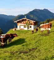 Einsam gelegene Almhütte für bis zu zehn Personen oberhalb von Saalbach-Hinterglemm.